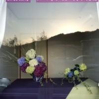 熊谷組紫陽花3